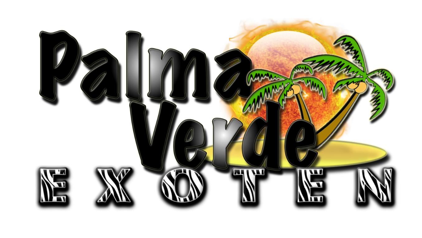 Palma Verde Exoten